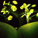 Nanobionik: Kresse als Leselampe, Bäume als Straßenlaterne